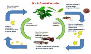 ciclo azoto