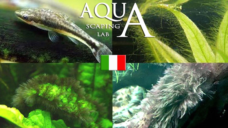 Alghe in acquario come prevenirle individuarle ed for Antialghe per acquario