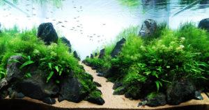 aquarium-architecture-takashi-amano-03