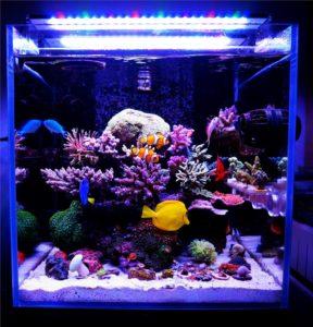Lampade led a series marine chihiros aquatic studio for Lampade a led lunghe